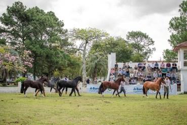 Prova de Morfologia do Cavalo Crioulo - Leandro Vieira