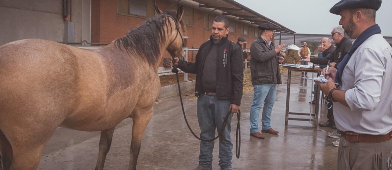 Primeira confirmação de animais por um técnico brasileiro é realizada na Itália