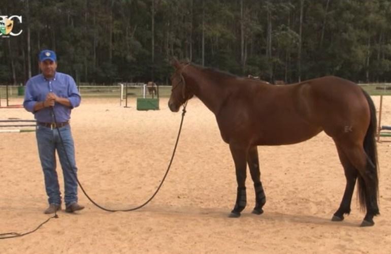 Exercícios de chão para cavalo de tambor