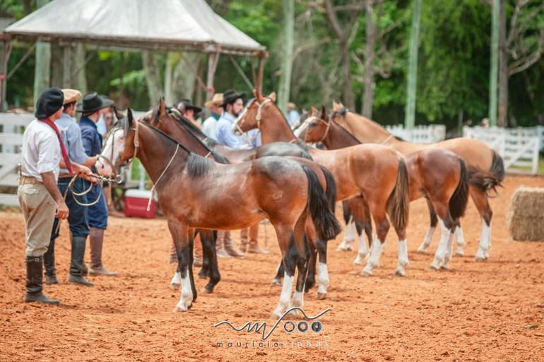 Marcaram presença 32 animais incentivo e 33 marcados em Guaíba/RS - - imagem: Maurício Vinhas Fotografia-8