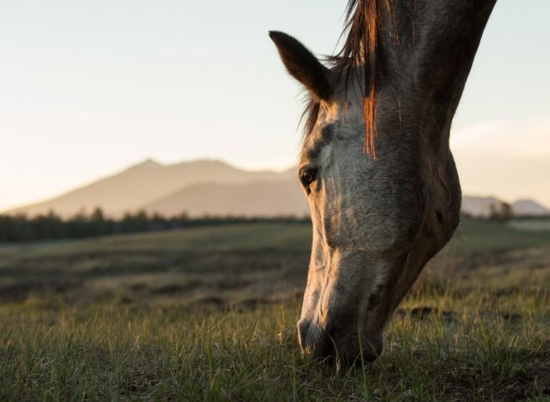 Hábito alimentares dos equinos e nutrição