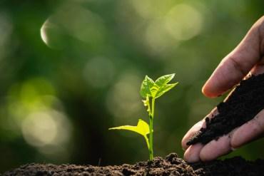 Investidores apostam em futuro sustentável para agricultura
