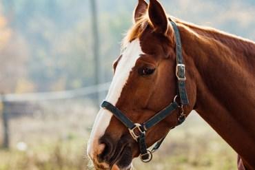 Água para cavalos