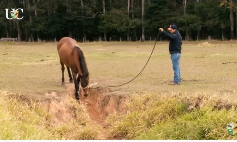 Trabalho de chão para cavalos de cavalgada