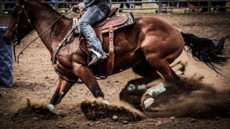 10 dicas para melhorar sua equitação