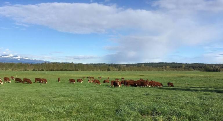 Novos padrões trazem benefícios econômicos e melhoras para o bem-estar animal