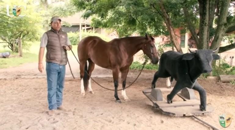 Cavalo que tem medo das coisas