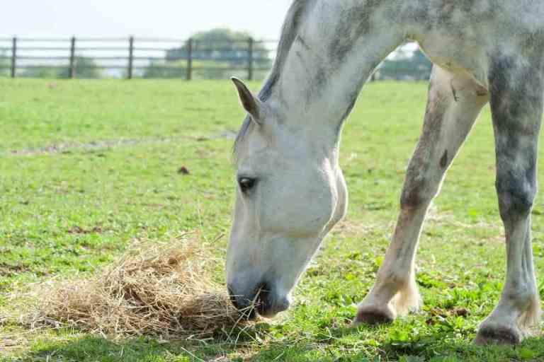 Alimentação para cavalos com tempo trabalho reduzido