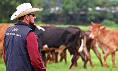 O bem-estar animal nos esportes equestres veio para ficar