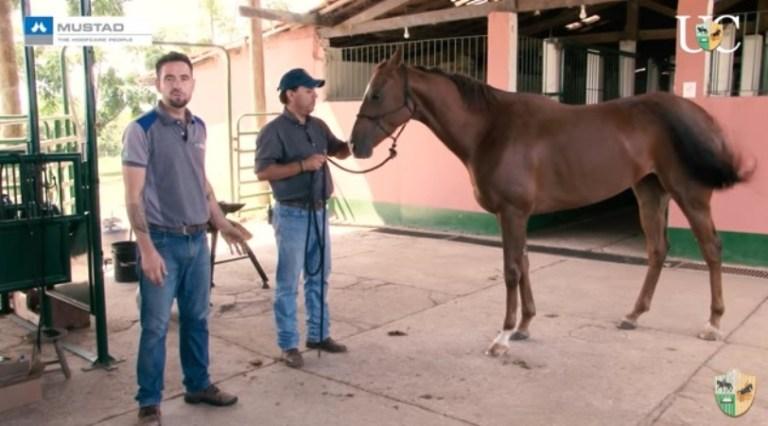 Horsemanship para ferrador