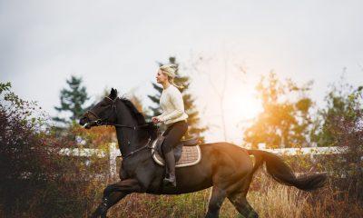 Suplementação nutricional de qualidade é essencial para equinos de alta performance, assim ficam mais resistentes às lesões e à fadiga, entre outros