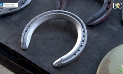 O Na Ponta dos Cascos da TV UC de hoje fala das regras de ferraduras para cavalos Mangalarga Marchador de acordo com a Associação