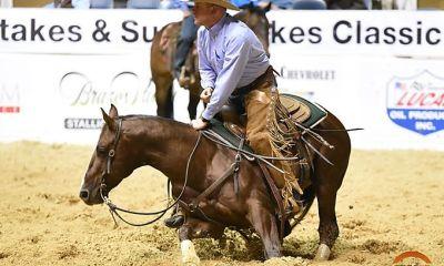 Luciano Rodrigues nos mostra em sua coluna da semana no portal Cavalus um passeio sobre as linhagens dominantes em cavalos de Apartação