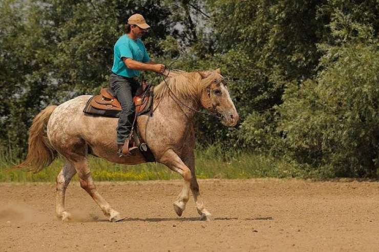 Uma transição suave é um sinal de um cavalo bem treinado. Pode parecer simples de alcançar, mas na verdade requer energia e equilíbrio.