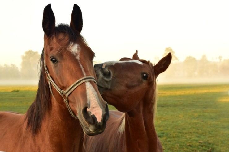 Com mais de 20 anos atuando com treinamento de cavalos, Aluisio Marins, sem dúvida, já passou por situações envolvendo algum tipo de problema