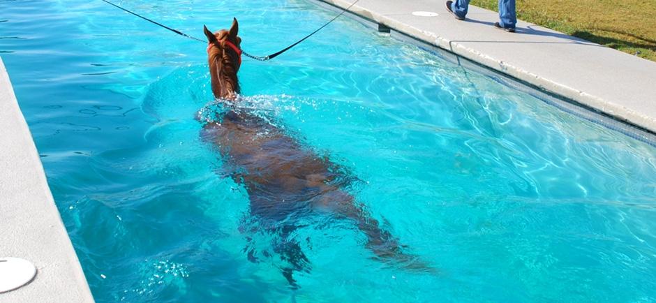 Benefícios da hidroterapia em cavalos