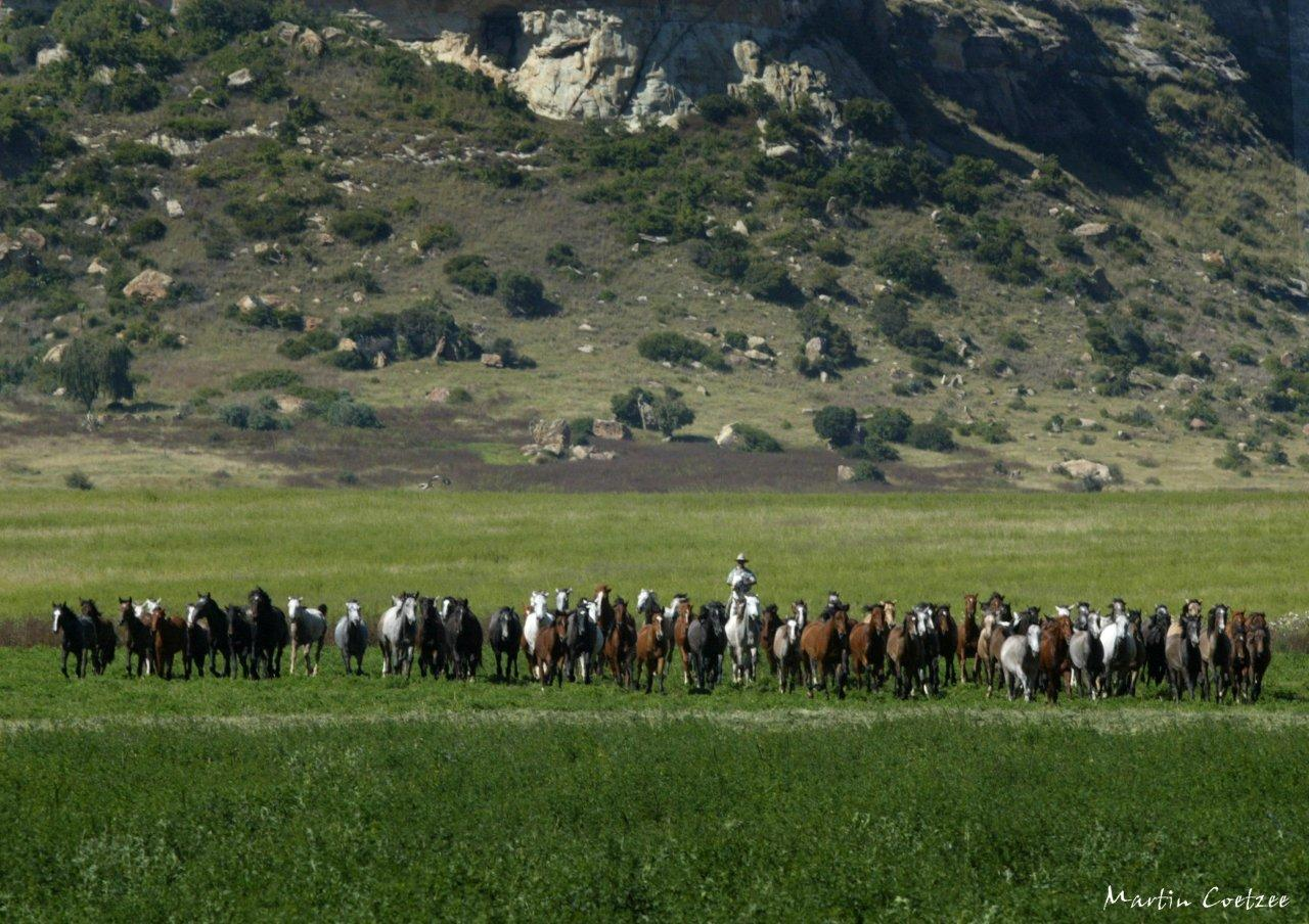 Cavalgada na África do Sul – Reserva de Witteberg
