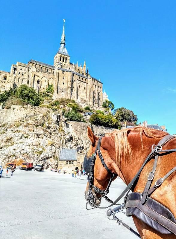 Paulo Junqueira conta em sua coluna da semana sobre um passeio a cavalo diferente do que ele costuma relatar aqui no portal: Atrelagem