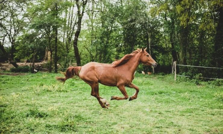 Perceber os sinais do corpo do cavalo ajuda-nos a entender as atitudes para que possamos adotar um manejo de segurança no trato com eles