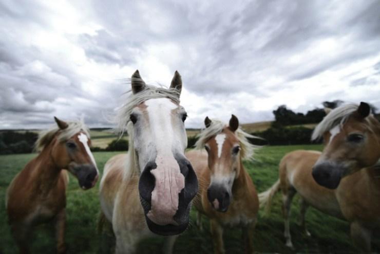 Logo após uma temporada atípica, sem a quantidade de eventos que normalmente acontece, agora é a hora das merecidas férias ao seu cavalo