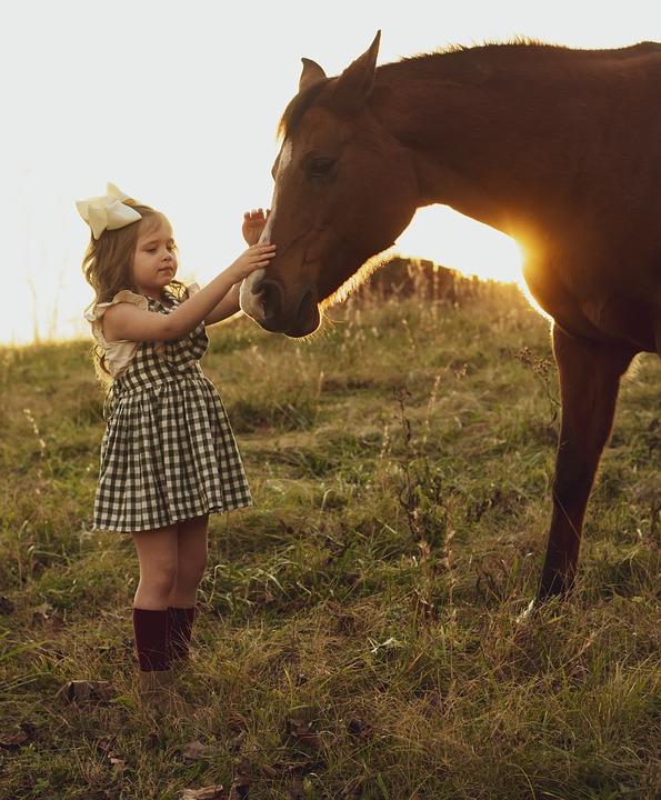 Você sempre teve vontade de comprar um cavalo e agora acha que chegou a hora certa? Preste atenção nessas dicas que são super importantes!