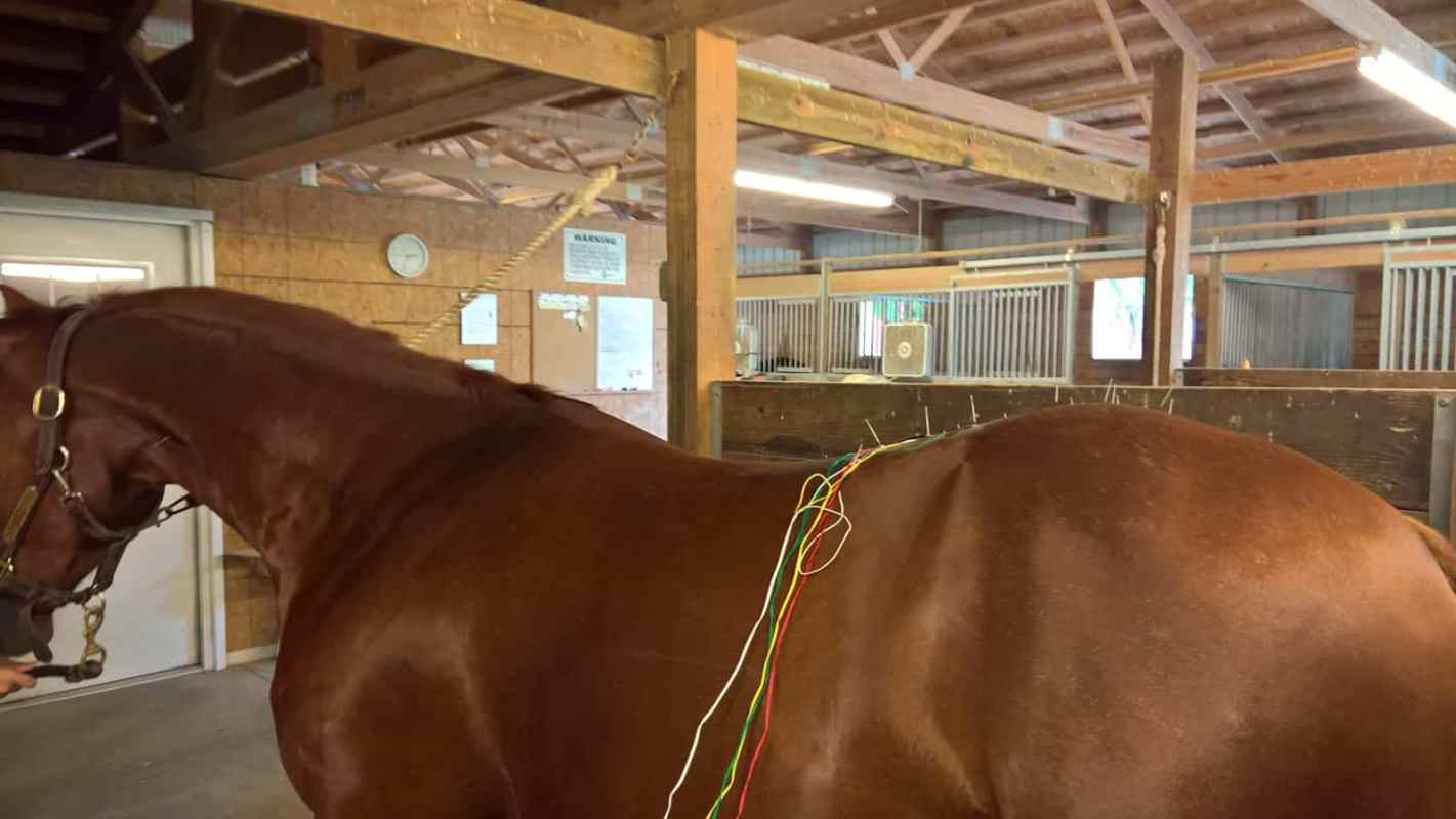 Eletro-Acupuntura no tratamento de equinos