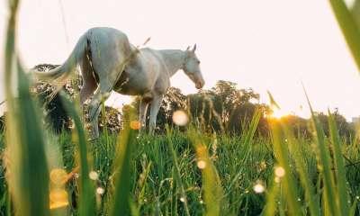 Aluisio Marins comenta em sua coluna tópicos imprescindíveis para o sucesso do seu dia a dia com seus amimais; o manejo de cavalos ideal
