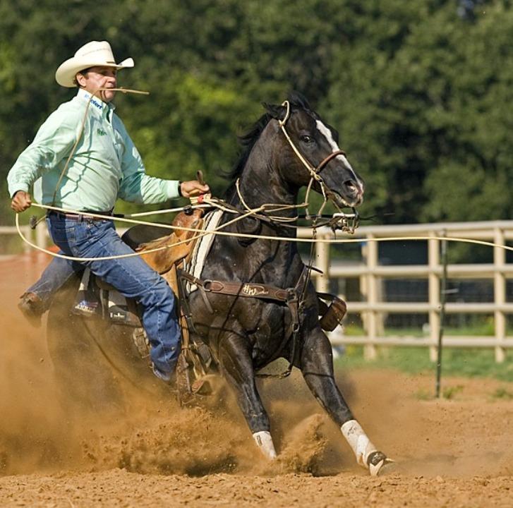 Conheça as histórias de Buzina, Pocotó, Play e Timeto Catch, cavalos brasileiros e suas participações no momento mais importante da PRCA