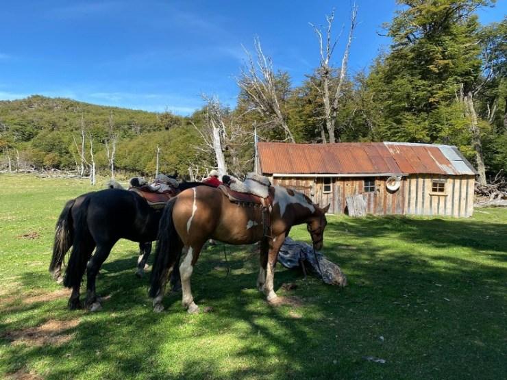 A coluna de Paulo Junqueira dessa semana passeia pela Argentina, e ele conta sobre uma cavalgada que fez Parque Nacional Los Glaciares