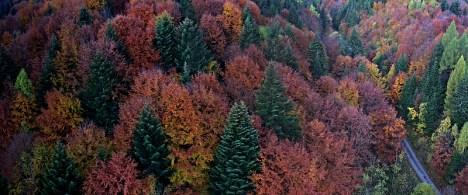 jesenný Čergov