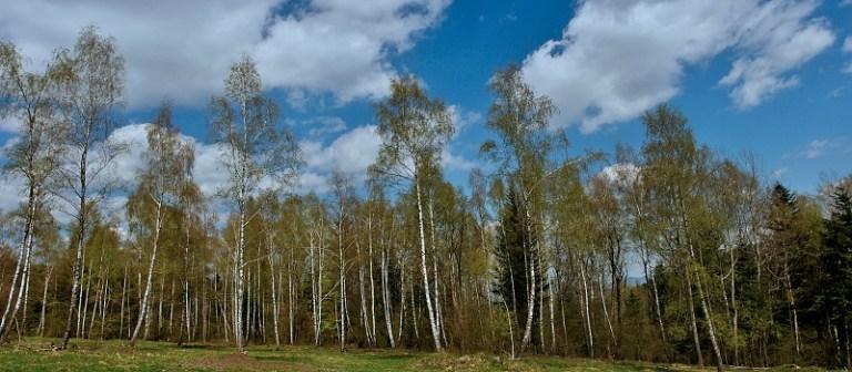 brezy na Čergove