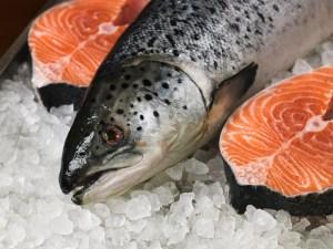 seafoods-web