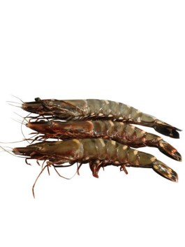 Black Tiger Head On Shrimps