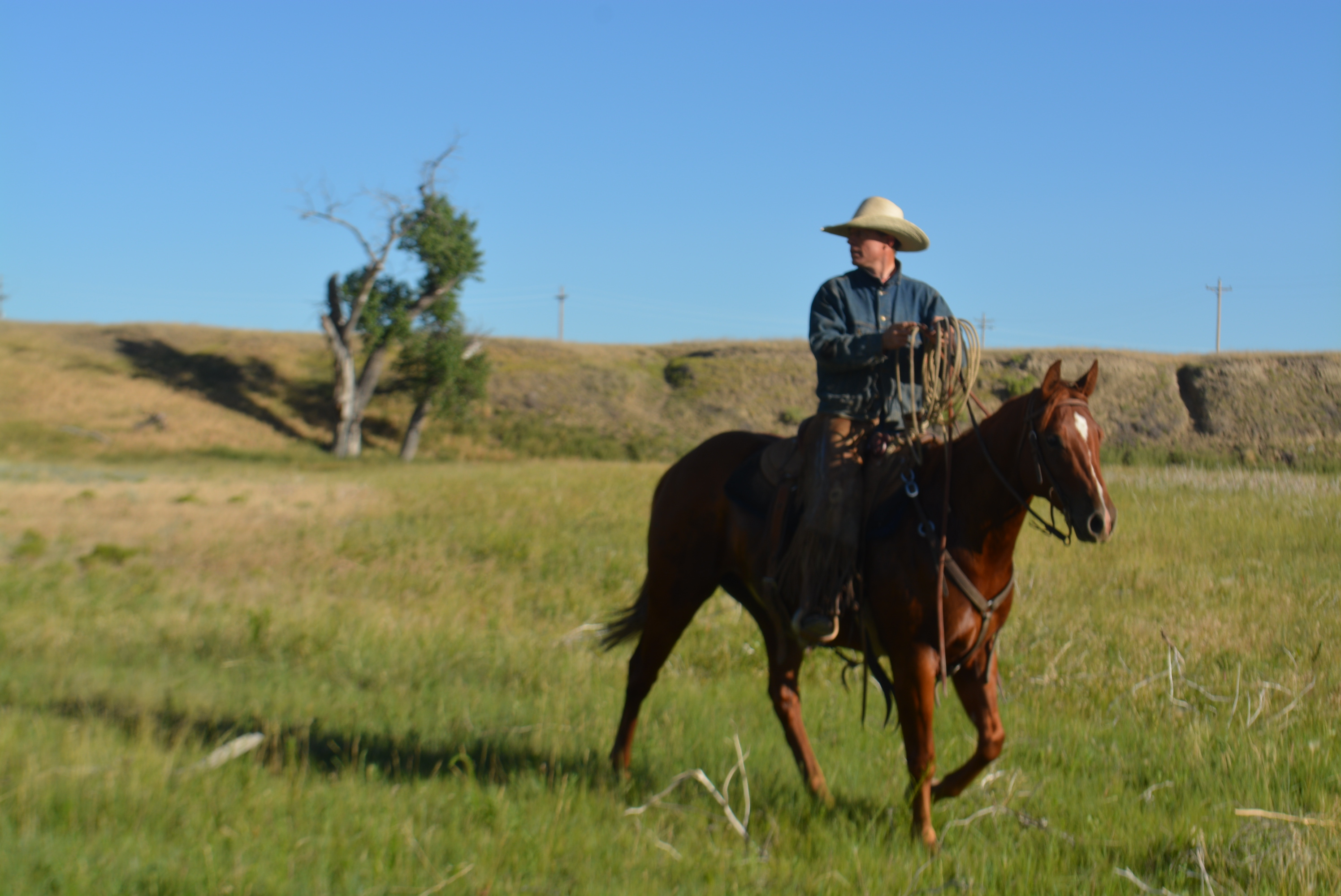 Featured Horse For Sale 2010 Ranch Horse Gelding