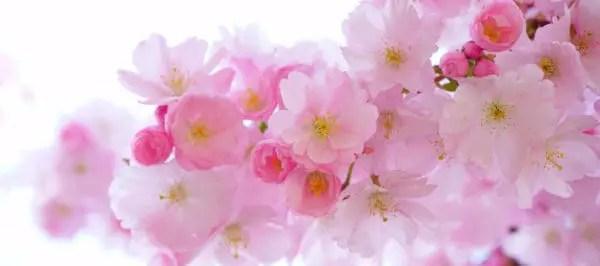 cây hoa kiểng