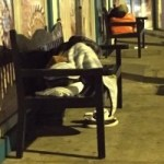 CIG claims just 12 homeless families