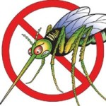 Cayman remains dengue free despite regional outbreak