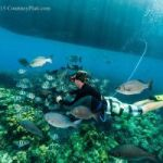 Photographer calls for far reaching reef fish protection