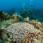 Cruise lines don't want reef destruction