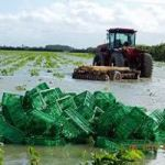 Food supplies cut short by rains