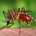 GT resident first to acquire local case of Zika