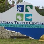 Turtle farm sacks employee over missing cash