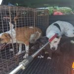 Stray dogs plague West Bay Road communities