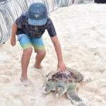 Turtle release on Governor's Beach this Saturday