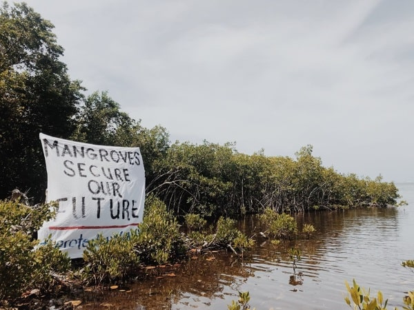 Cayman Mangroves