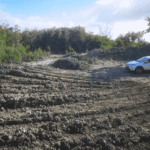 CPA clears developer over mangrove destruction