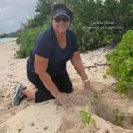 DoE marks 500th wild turtle nest
