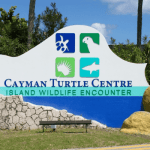 Turtle farm accounts delayed by fraud case