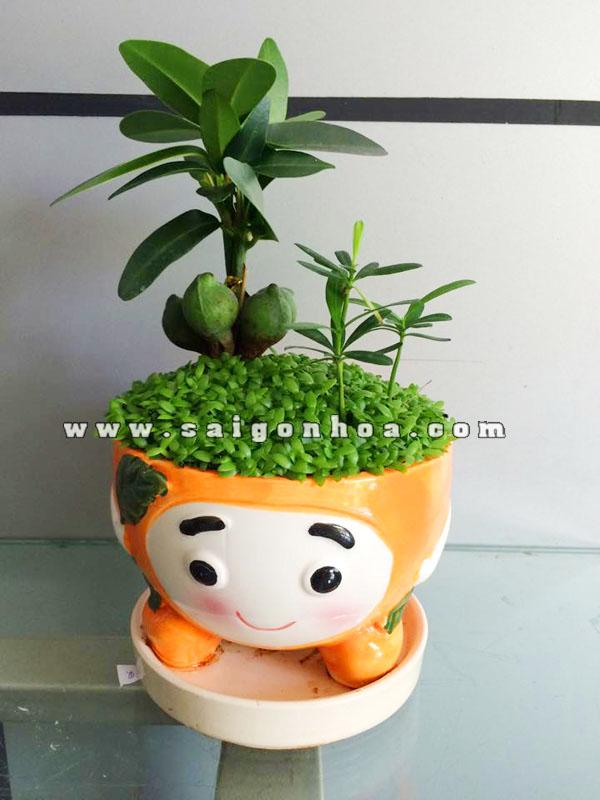 Cây May Mắn Tài Lộc Chậu Trái Cây | Sài Gòn Hoa