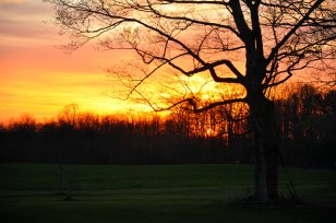 springtime_trees_0132